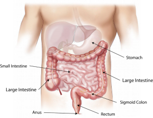 intestinal structure | complete digestive stool analysis | Perpetual Wellbeing