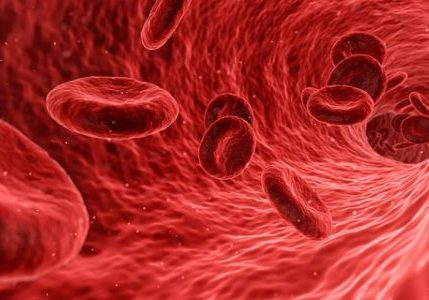 red blood cells | pyroluria or pyrrole disorder treatment plan | Perpetual Wellbeing